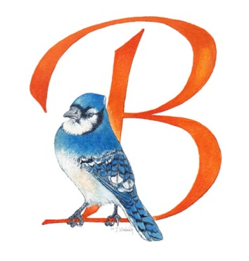 bird, blue jay, letter with bird, bird with letter, alphabet bird, letters of the alphabet