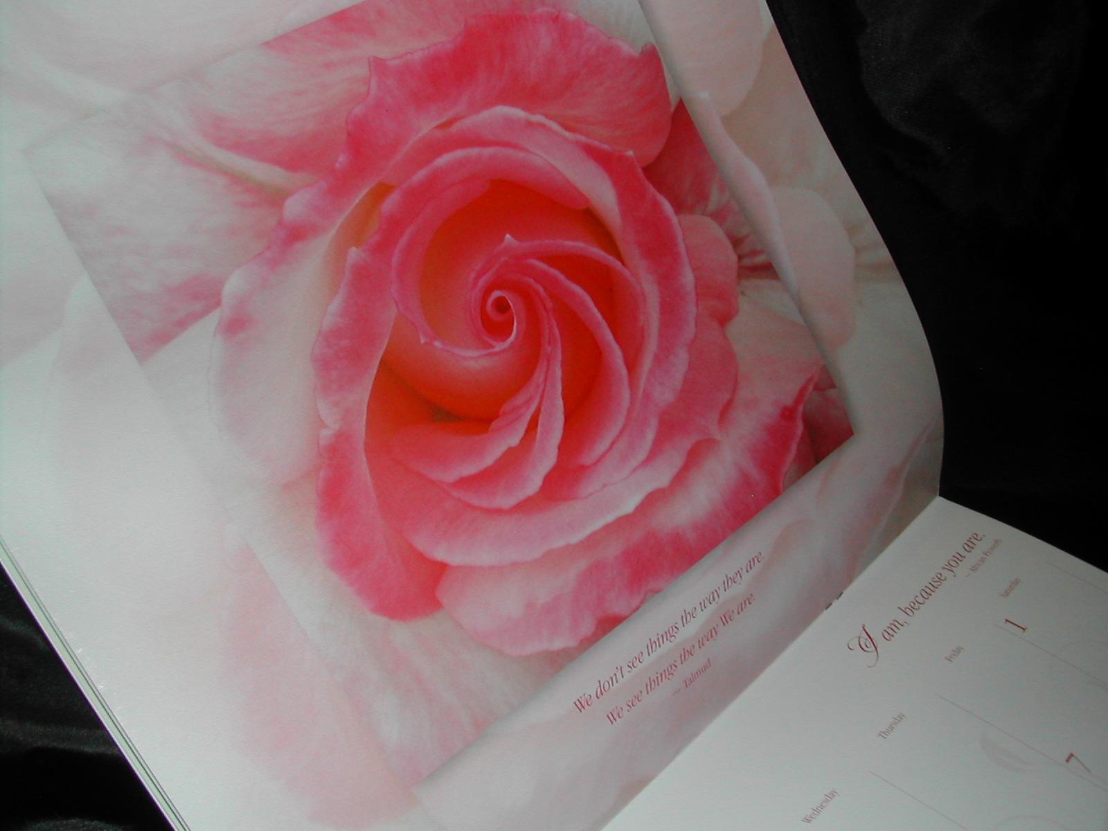 2013 Calendars, Edible flowers calendars, Belluccia font, calligraphy ...